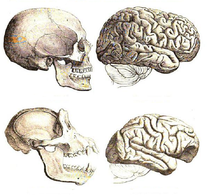 a comparison of modern humans and chimpanzees The humans and chimpanzees were not 50% similar genetically, or 60%, or even 80%, they were 98 to 99% similar, nearly identical all of the differences between us and them, must relate to the 2% what has followed has been a rich and detailed consideration, a consideration that is.
