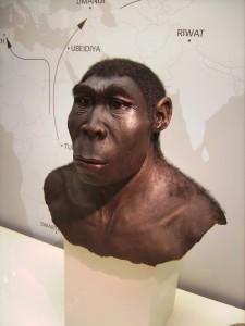 Человек прямоходящий (Homo erectus), реконструкция. Хранится в Вестфальском археологическом музее, Херн, Германия.