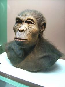 Человек умелый (Homo habilis), реконструкция. Хранится в Вестфальском археологическом музее, Херн, Германия.