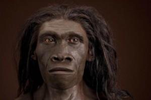 Голова питекантропа (реконструкция). Хранятся в Национальном музей естественной истории, Вашингтон, США.