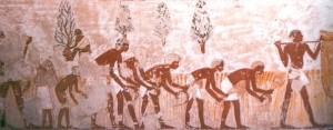Фреска из гробницы Менена, изображающая сбор урожая, Фивы..