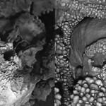 Череп альтамурского человека, застрявшего в пещере.