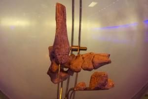 Кости ноги, с которых ученые начали исследование Маленькой ноги