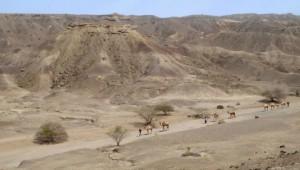 Место где были найдены останки (парк Аваш, Эфиопия)