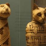 Мумии кошки