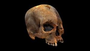 3D-модель, обнаруженного черепа.