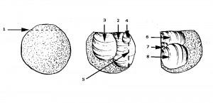 Клектонская техника первичного расщепления (клектонский нуклеус).