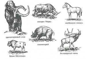 Нижне-среднеплейстоценовые животные