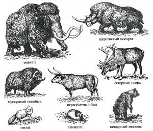 Верхнеплейстоценовые животные