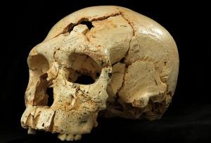 Череп №17 из Расщелины костей.