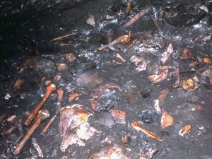Останки костей, найденные в пещере Скалория в конце 1970-х гг.
