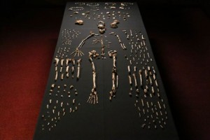 Фрагменты костей Homo Naledi