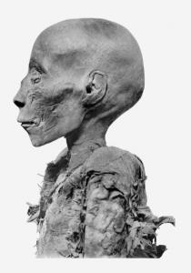 Возможно, мумия Тумоса I