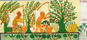 Поливка сада при помощи шадуфов. Роспись из гробницы Ипуи в Фивах. Египет. XIX династия.