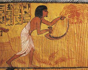 Сбор урожая. Фреска из гробницы Сеннеджема в Дейр аль-Мадина (напротив Фив). XIX династия.
